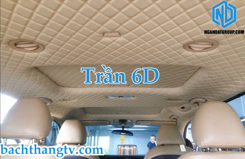 Trần 6D